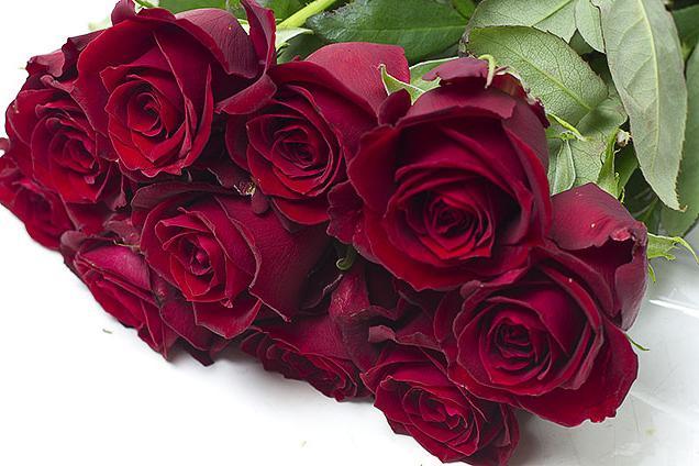 Бордовые розы