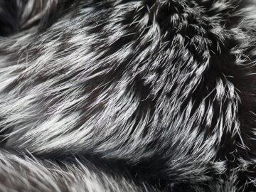 Мех чернобурки