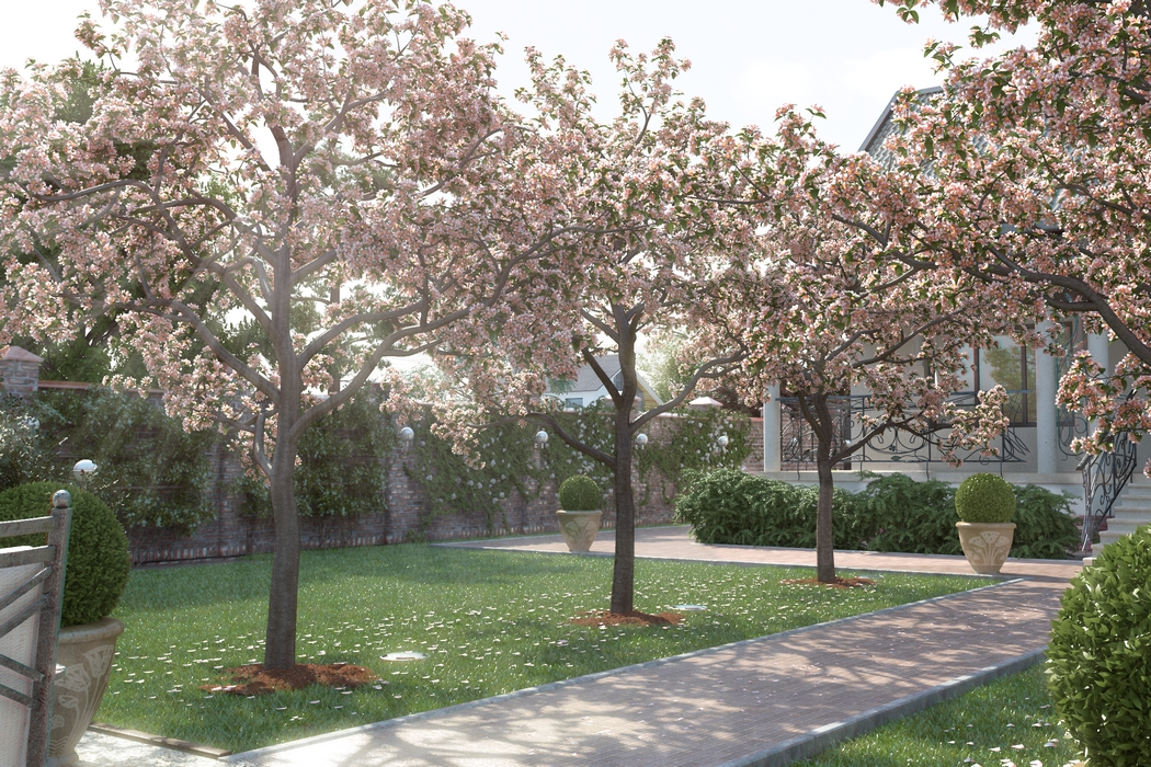 плодовые деревья на дачном участке
