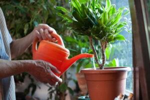 Полив домашних цветов