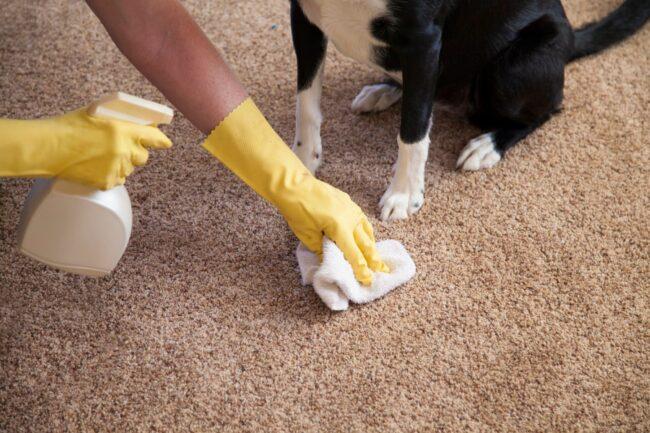 чистим ковер с запахом