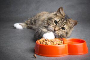 кот ест