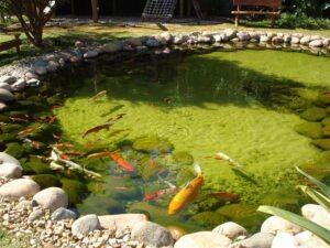 Пруд с рыбками на садовом участке